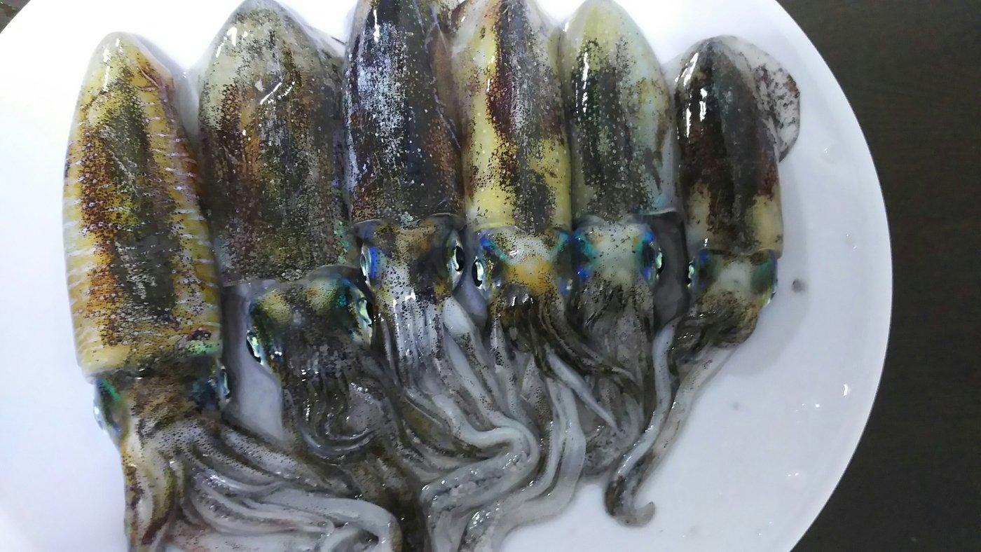 リュウマさんの投稿画像,写っている魚はアオリイカ