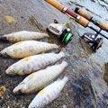 釣り人®️さんの岩手県遠野市での釣果写真