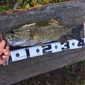 ノリリンさんの長野県飯山市での釣果写真