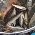 其処乃所 宜君さんの奈良県五條市での釣果写真