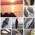 へたっぴ三ちゃんさんの宮城県亘理郡での釣果写真