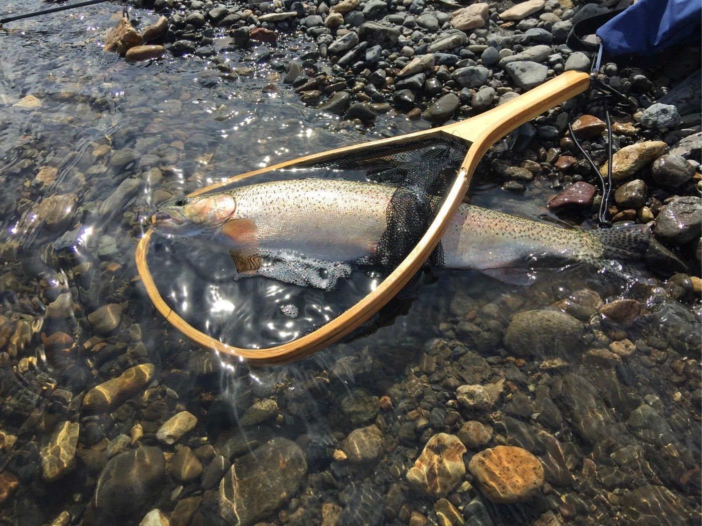 れいんぼーほたてさんの投稿画像,写っている魚はニジマス