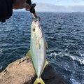 ぐぐさんの熊本県天草郡での釣果写真