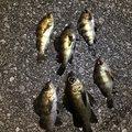 きょんさんの大分県国東市での釣果写真