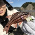 kubotaさんの高知県四万十市での釣果写真