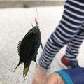 yoshiさんの沖縄県でのスズメダイの釣果写真