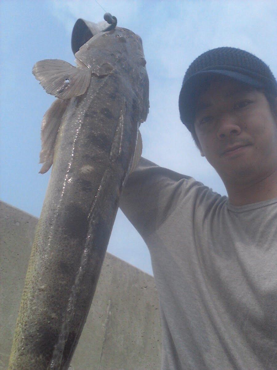 ゆうきさんの投稿画像,写っている魚はコチ
