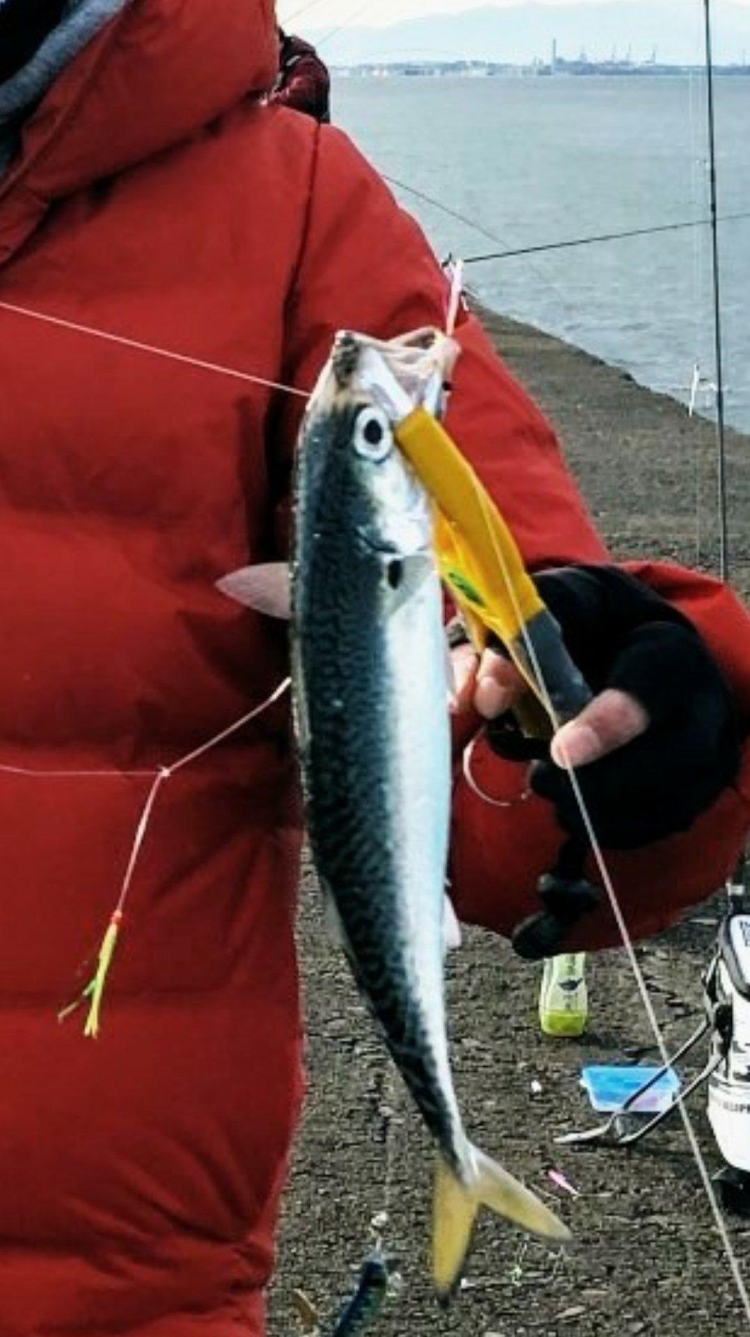 ジグマイスターさんの投稿画像,写っている魚は