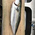 Keita Nakamuraさんの鹿児島県肝属郡での釣果写真