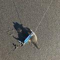 m-32さんの茨城県鉾田市での釣果写真