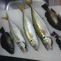 コウキさんの愛知県東海市での釣果写真