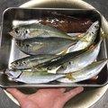 ユージンさんの奈良県吉野郡での釣果写真