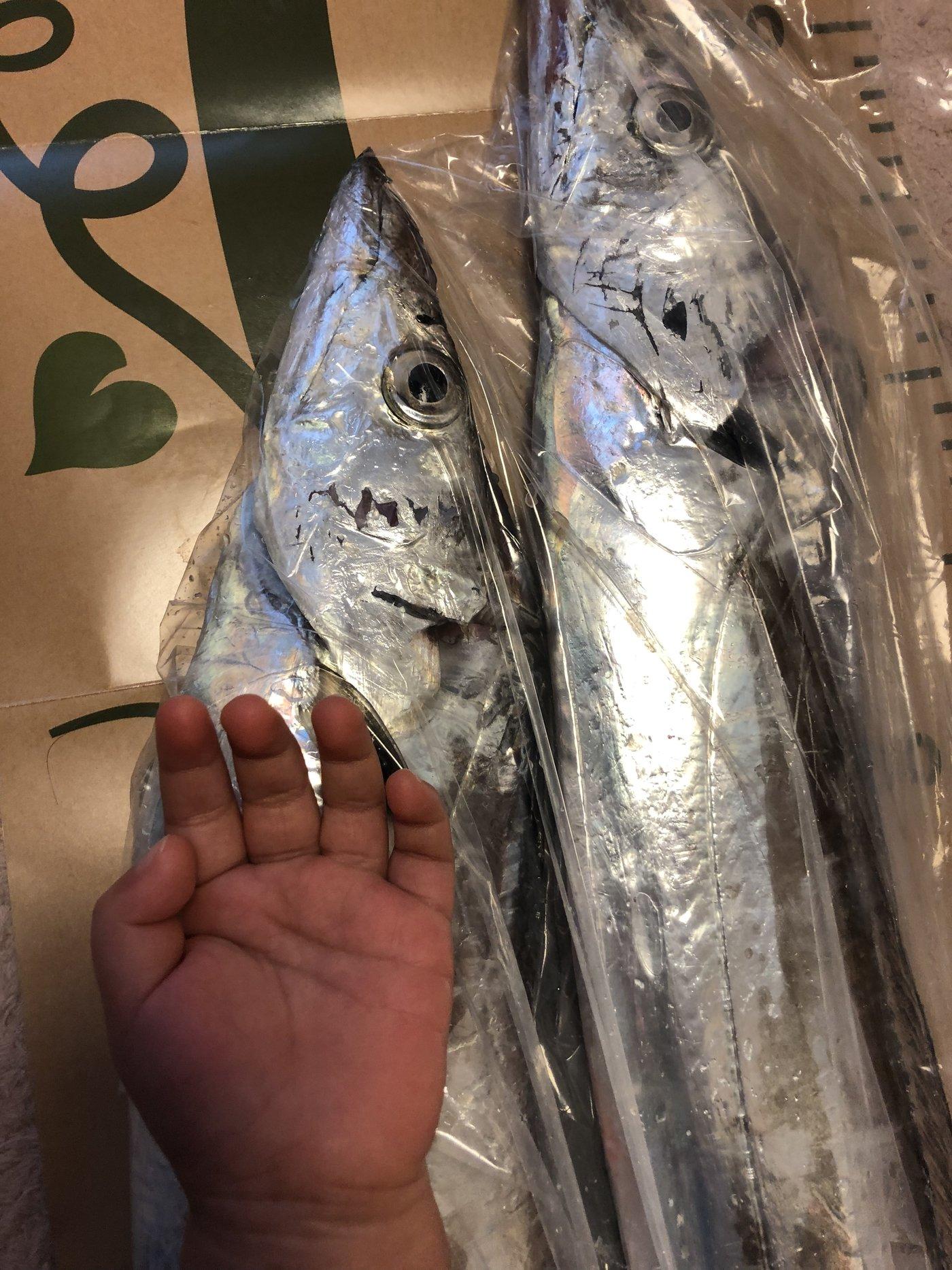 ひろゆきさんの投稿画像,写っている魚はタチウオ