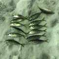 yさんの石川県鳳珠郡での釣果写真
