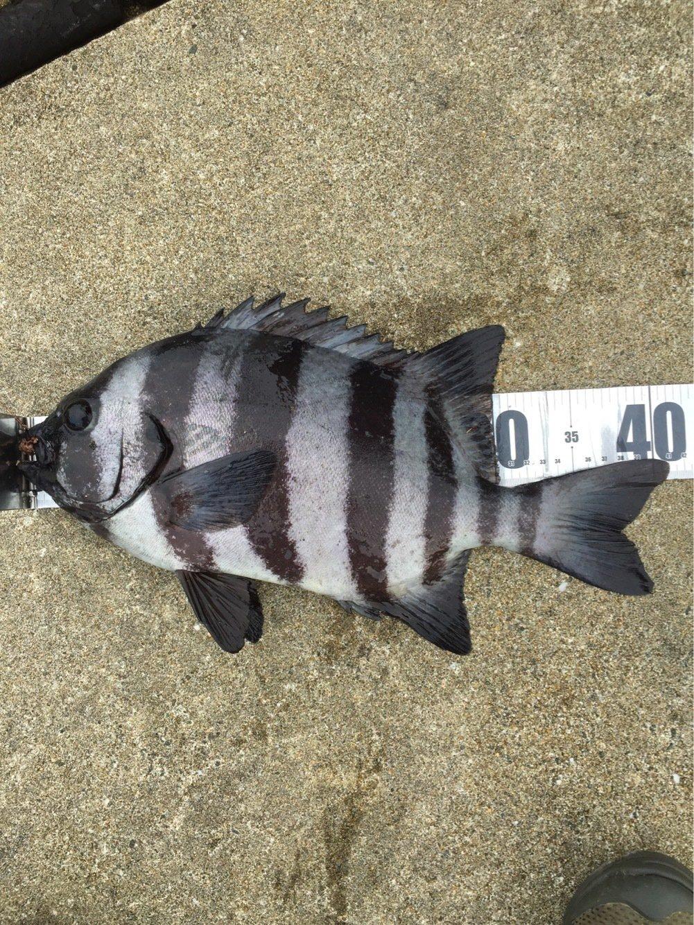 べーさんの投稿画像,写っている魚は