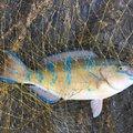 Robさんの沖縄県国頭郡での釣果写真