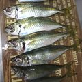 tomo48さんの長崎県松浦市での釣果写真