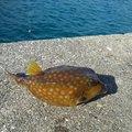 有頂天一号さんの和歌山県東牟婁郡での釣果写真