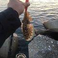らたちゃんさんの長崎県諫早市での釣果写真