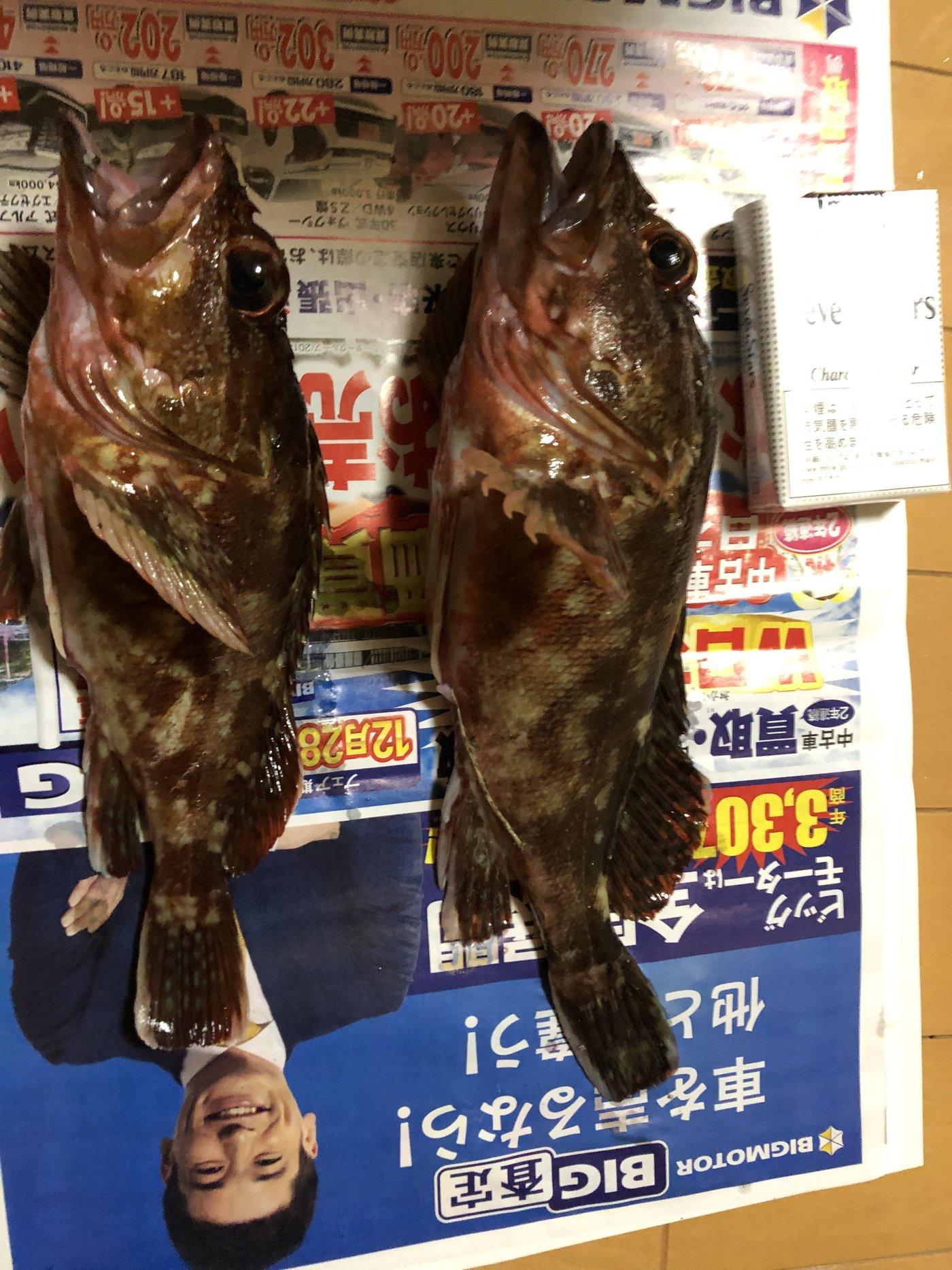 しおさんの投稿画像,写っている魚はカサゴ