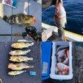 マサマサ🐡さんの高知県安芸市での釣果写真