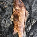tkyさんの鹿児島県熊毛郡での釣果写真
