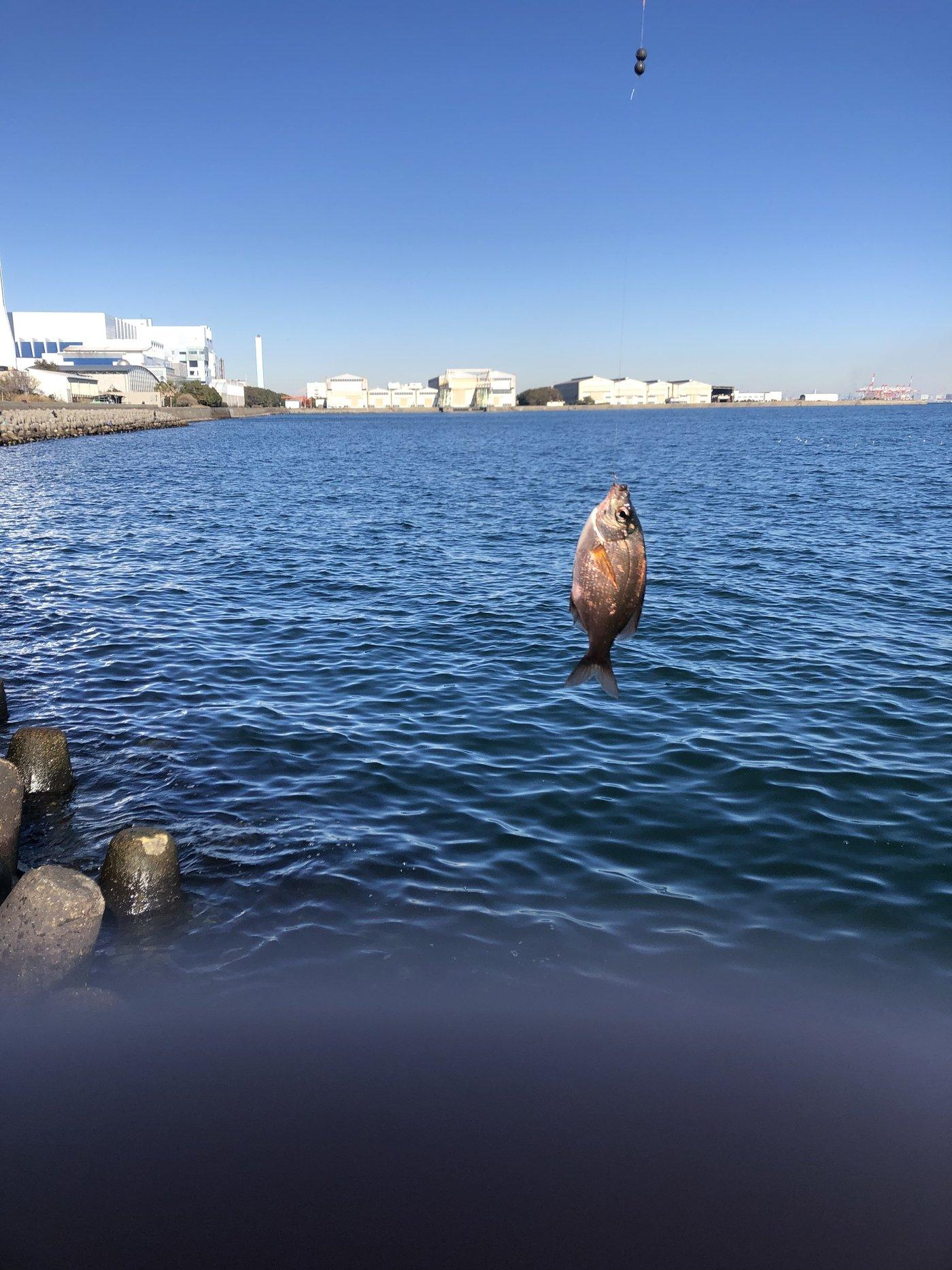 kosuke!!さんの投稿画像,写っている魚はウミタナゴ