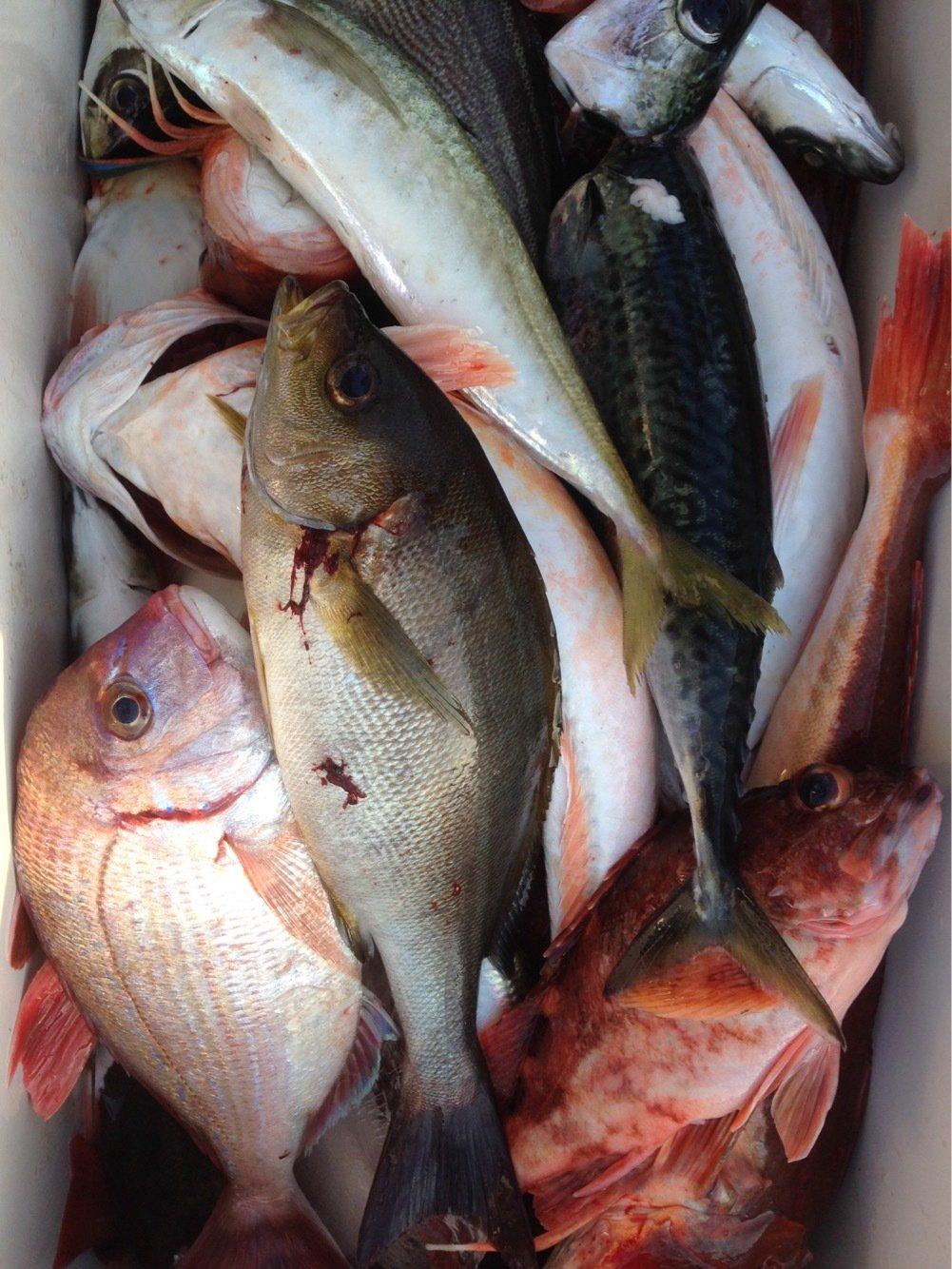 遊英丸さんの投稿画像,写っている魚は