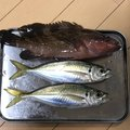 N&Nさんの広島県呉市での釣果写真