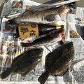 菅原将仁さんの岩手県陸前高田市でのカレイの釣果写真