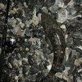 ざんぎ※釣具は大事に‼︎さんの静岡県でのコチの釣果写真