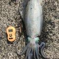 ryopeiさんの鹿児島県奄美市での釣果写真