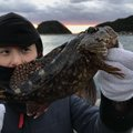 kubotaさんの和歌山県有田市での釣果写真