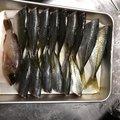 レオくんさんの大分県臼杵市での釣果写真