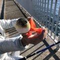 辻本圭佑さんの兵庫県明石市でのマダイの釣果写真