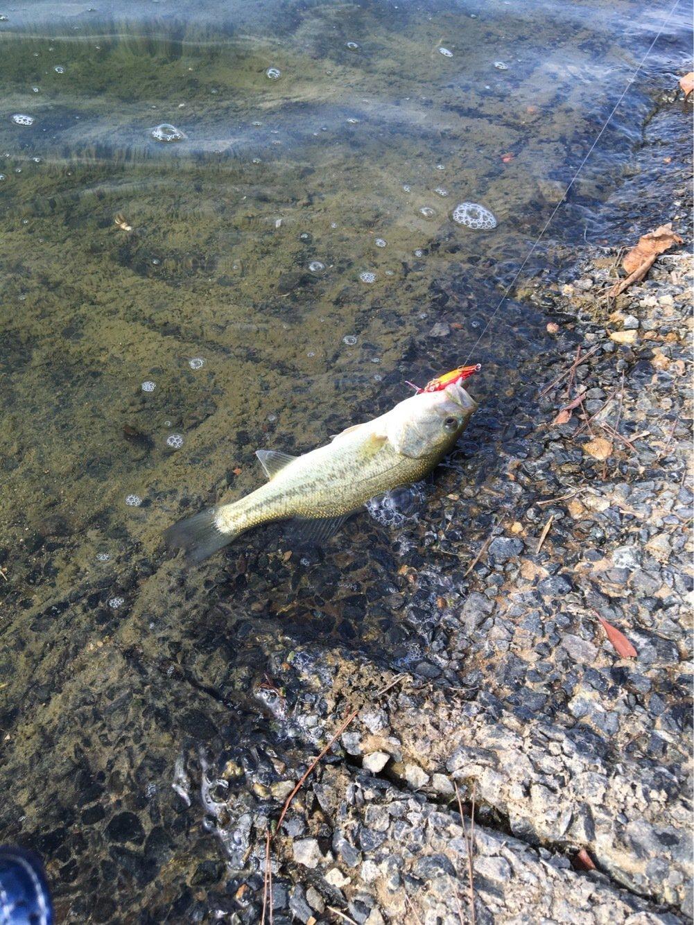Miyaさんの投稿画像,写っている魚は