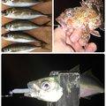 ひょーどるさんの佐賀県東松浦郡での釣果写真