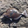 キザクラファンさんの鹿児島県南九州市での釣果写真
