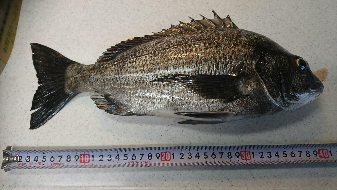 6-Senseさんの投稿画像,写っている魚は