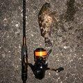 アオビカリさんの大阪府泉南市での釣果写真