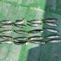 関西のタッキーさんの和歌山県東牟婁郡での釣果写真