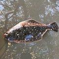 lisukeさんの神奈川県中郡での釣果写真