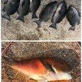 Hiroshiさんの高知県土佐清水市での釣果写真