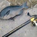 かずくんさんの和歌山県西牟婁郡での釣果写真