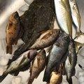かつどんさんの大分県東国東郡での釣果写真