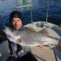 ヨッシーさんの千葉県袖ケ浦市でのスズキの釣果写真
