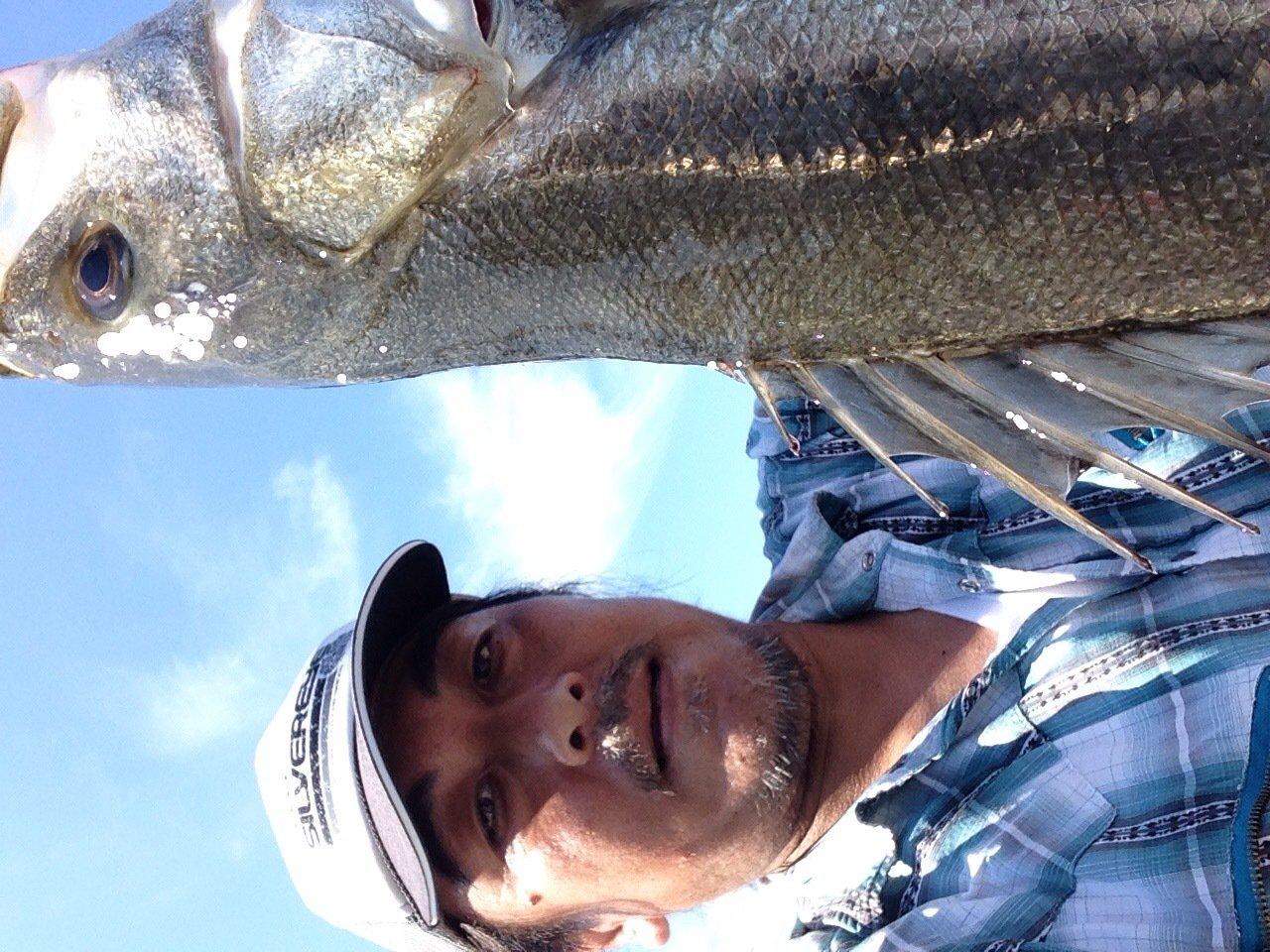 ジーザス・代田さんの投稿画像,写っている魚はスズキ