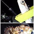 KRO さんの静岡県伊豆市でのカサゴの釣果写真