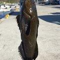ネッティさんの宮城県気仙沼市での釣果写真