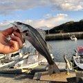 コウスケさんの山口県熊毛郡での釣果写真